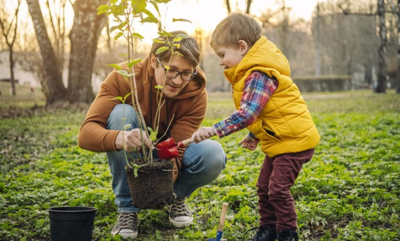 Photo of Money-Saving Tips for Purchasing Plants and Trees